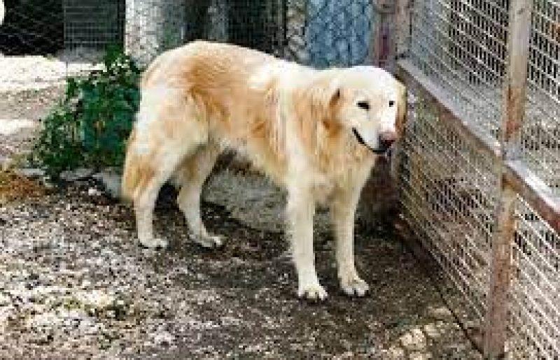 Il canile di Bagnaia potrà ospitare fino a 200 animali