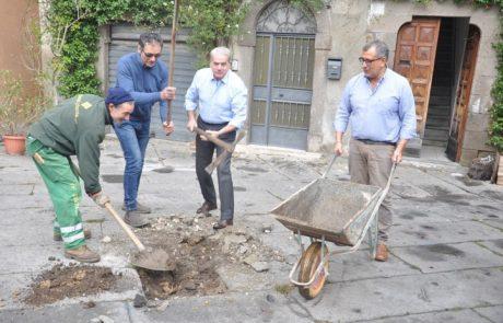 Arena giardiniere, piantati due alberi a piazza del Gesù