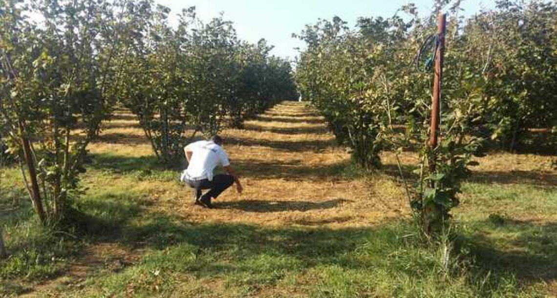 Fitofarmaci, la Forestale eleva 15 contravvenzioni e denuncia un agricoltore
