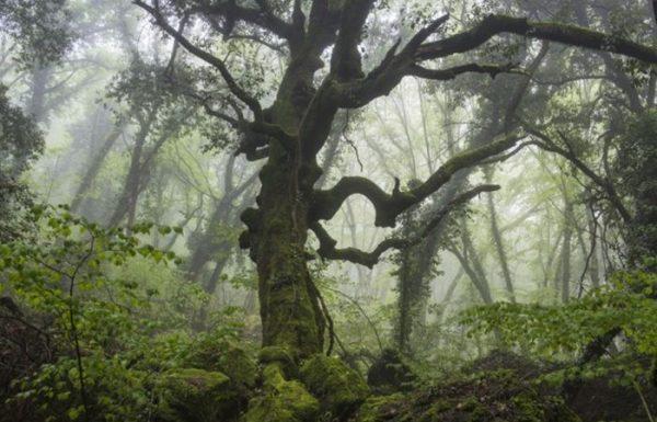 Una passeggiata tra gli alberi secolari