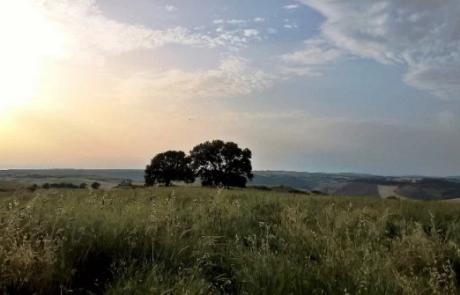 Impianti fotovoltaici, pronti altri dieci progetti. Su Tuscania parte ricorso al Tar